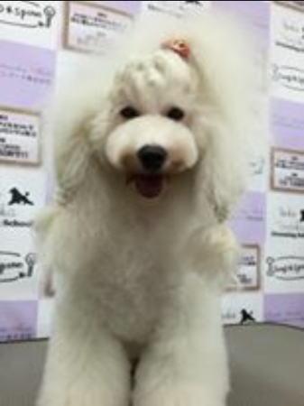 セミナーモデル犬