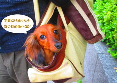2015-05-yokohama28_201507041921523c1.jpg