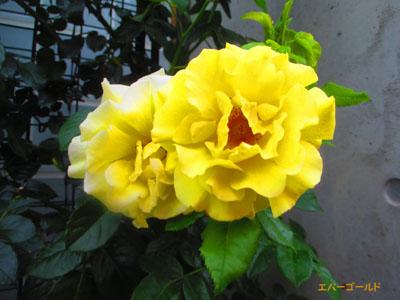 2015-05-yokohama35.jpg
