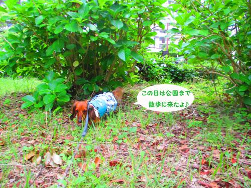 2015-06-azisai1.jpg