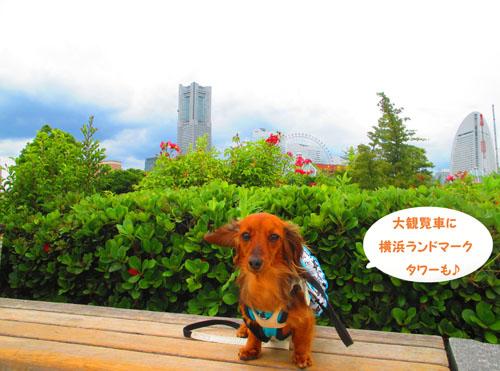 2015-06-yokohama14.jpg