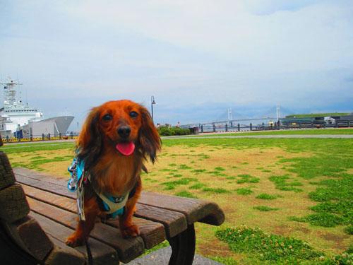 2015-06-yokohama23.jpg