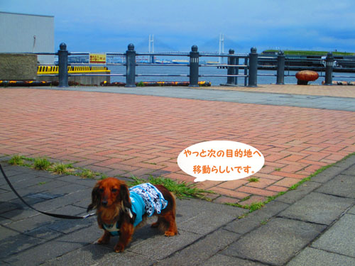 2015-06-yokohama28.jpg