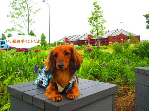2015-06-yokohama4.jpg