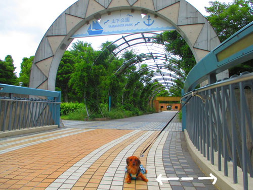 2015-06-yokohama51.jpg