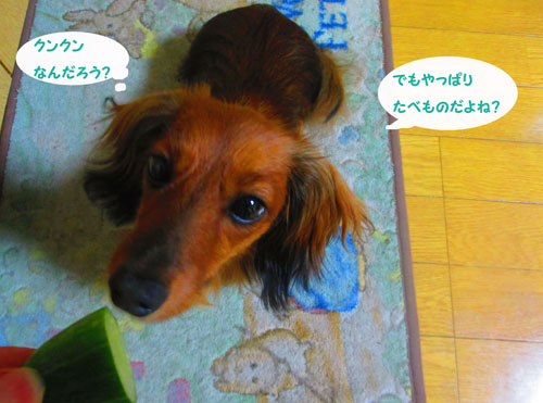2015-07-cucumber5.jpg