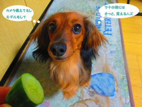 2015-07-cucumber6.jpg