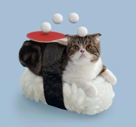 猫ずしニャー太05