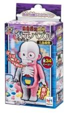 人体模型04