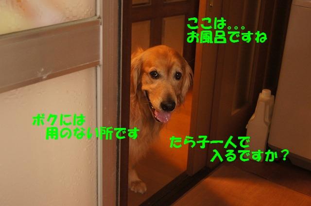DSC05967.jpg