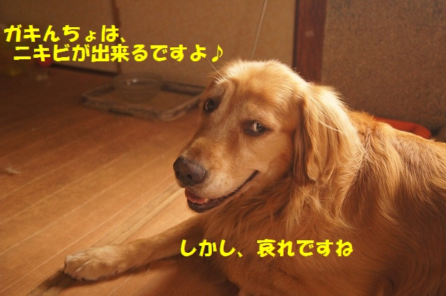 DSC05985.jpg