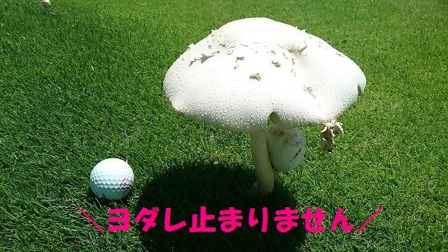 DSC_0650.jpg
