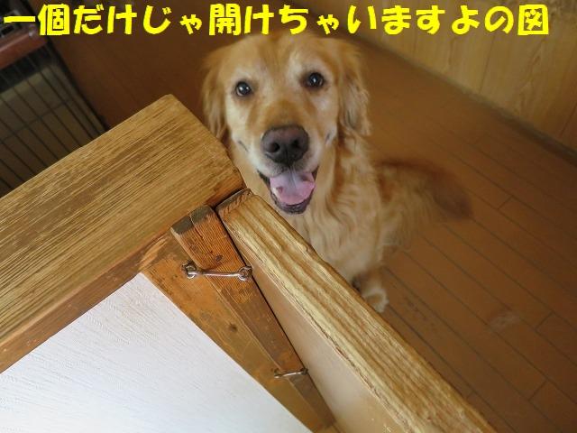 IMG_4737a.jpg