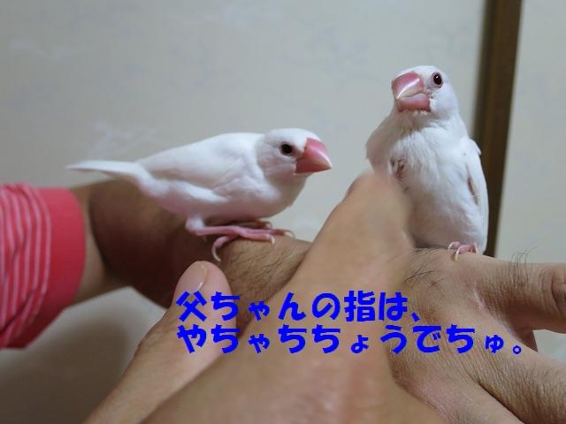 IMG_4772q.jpg