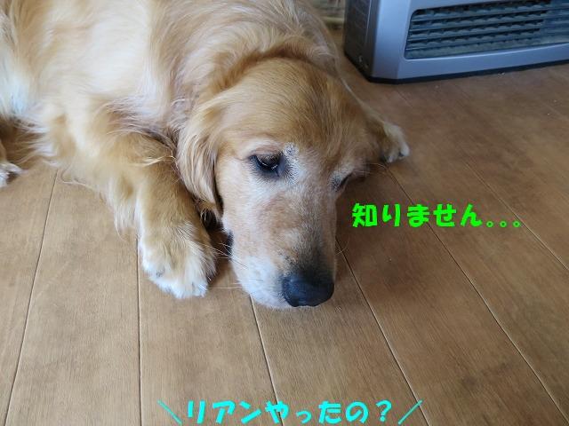 IMG_4809.jpg