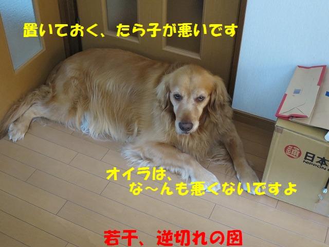 IMG_4831.jpg