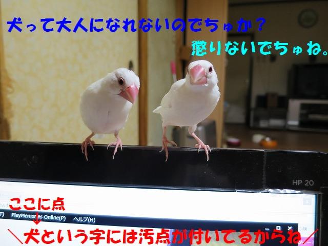 IMG_4882_3.jpg