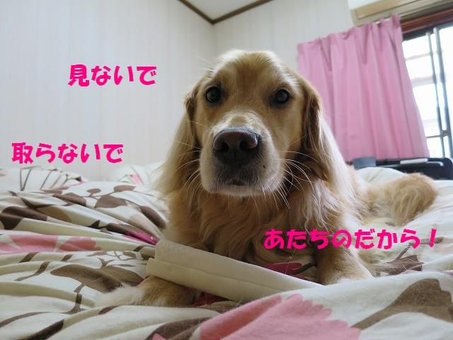 IMG_4886.jpg