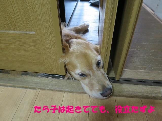 IMG_5271.jpg
