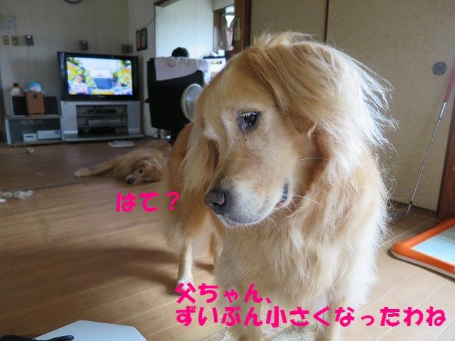 IMG_5323.jpg