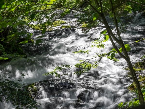 八千穂高原自然園 B