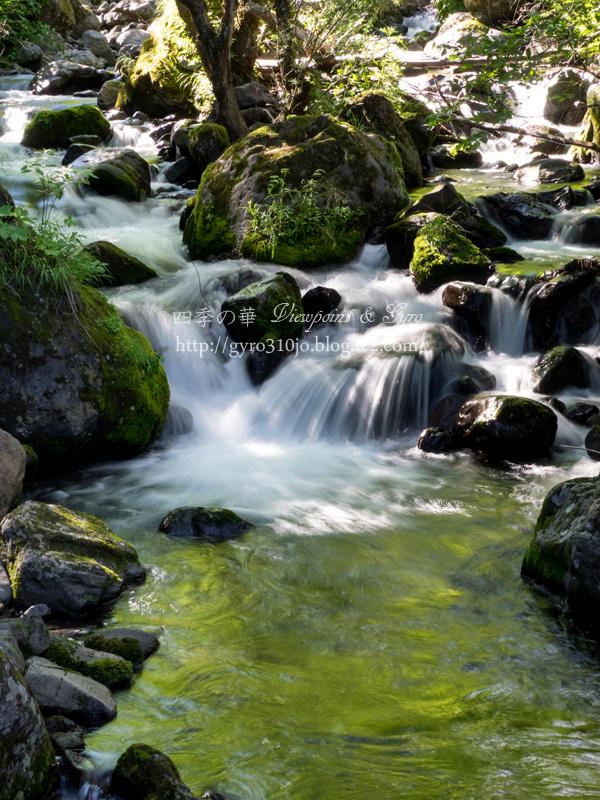 八千穂高原自然園 H