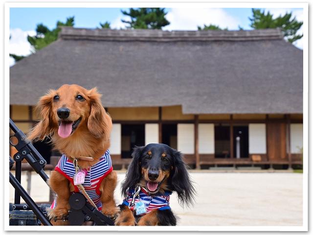 散歩☆昭和記念公園