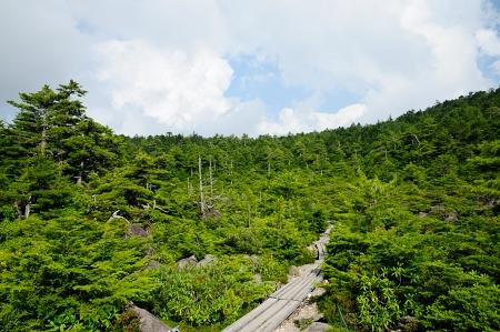 白駒池(木道)