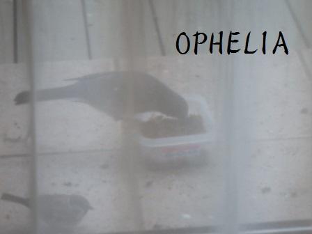23DEC14 SUZUME 036 OPHELIA