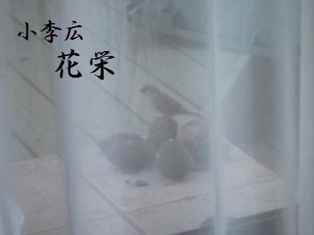 23DEC14 SUZUME 009 KAEI