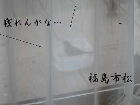 01JAN15 MIJOU 001 ICHIMATSU