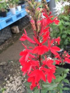 夏の背の高い花-3