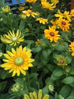 夏の背の高い花-6