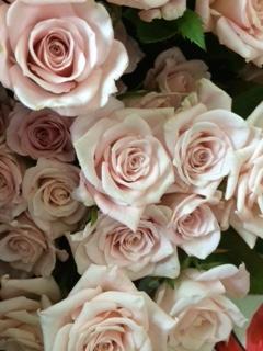 薔薇セール-3