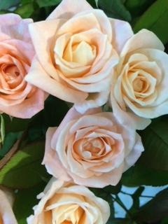 薔薇セール-5