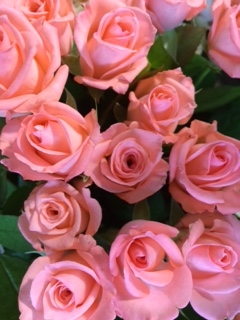 薔薇セール-6