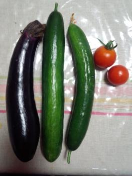 20150620収穫
