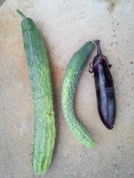 20150627収穫