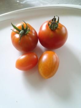 20150711収穫朝