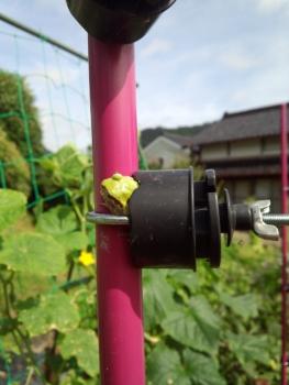 20150712畑仕事3