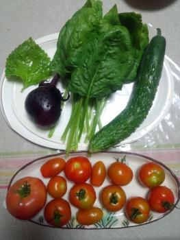 20150713収穫