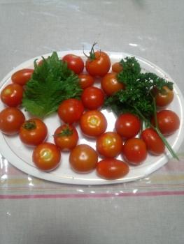 20150717夕方収穫