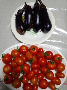 20150720収穫