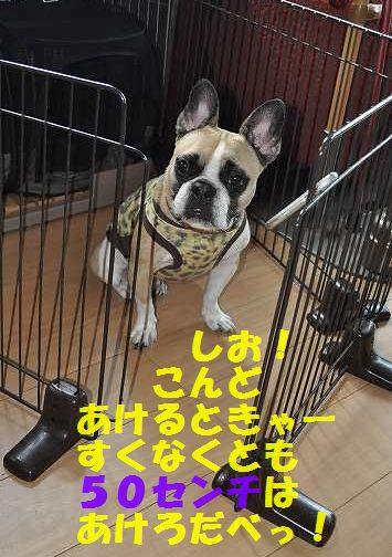 DSC_0144_20150728100419e7f.jpg