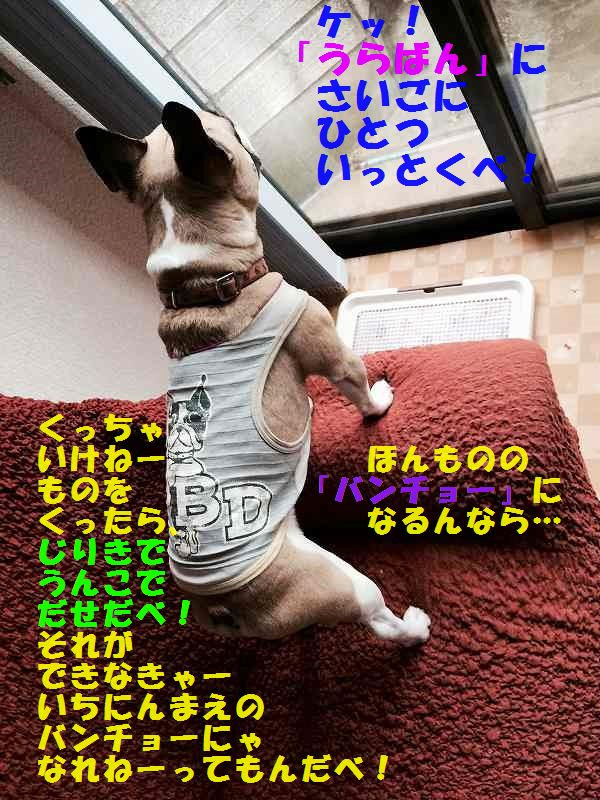IMG_4028_20150605095632a88.jpg