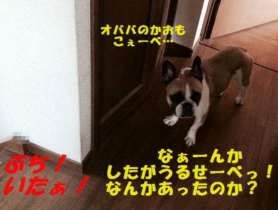 IMG_8311.jpg