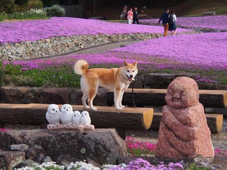 花のじゅうたんにて