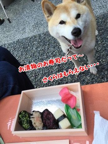 お寿司だって~