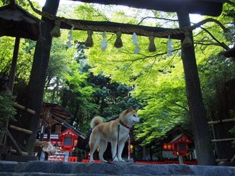 野宮神社にて