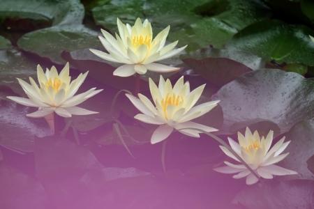 (5)水辺の花園 (スイレン X-E1 55~200)